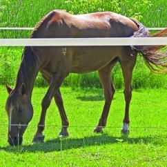 solstice2014_horse